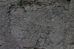 Texture of the earth, grass, roots wood. Background layer below the ground with roots that dug the wells of drought on agriculture stock photos