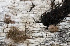Background of layered limestone with algae Stock Images