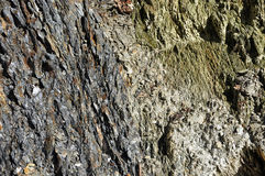 Background of a layered metamorphic rock Royalty Free Stock Photography