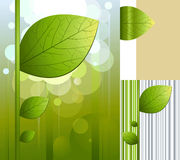 Background with leaf. The abstract it is green a blue background with leaf
