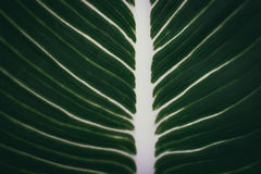Background Leaf surface Royalty Free Stock Image