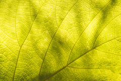 Background from leaf Stock Photos