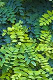 Background Leafs. Background of green leafs and gradient variations Stock Images