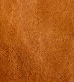 Background of leather Stock Image