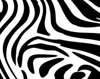 Background Leather zebra. Background skin zebra, vector art illustration texture stock illustration
