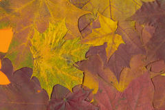 Background from leaves Royalty Free Stock Images