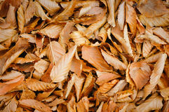 Background leaves Royalty Free Stock Photos