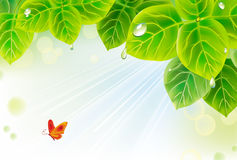 Background with leaves Stock Images