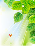 Background with leaves Royalty Free Stock Photography