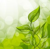 Background with leaves Royalty Free Stock Images