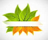 Background with leaves Stock Photos