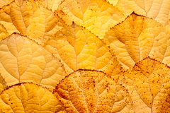 Background of leaves Stock Image