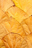 Background of leaves Royalty Free Stock Photos
