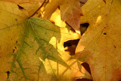 Background Leaves. Close up autumn leaves for background Stock Photo