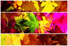 Background leaves, autumn colors. Composition with three cuttings of shots with maple leaves of different colors Royalty Free Stock Photography
