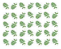 The background of the leaves. The basis for the background of green leaves from the tree Stock Photo