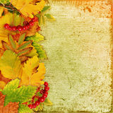 Background with leaves and berries Stock Images