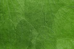 Background from leaves of bright green color Stock Photography