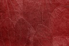 Background from leaves of bright red color Royalty Free Stock Image