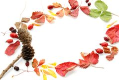 Background with leaves and cones Royalty Free Stock Photos