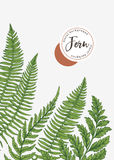 Background with leaves of fern. Royalty Free Stock Photo