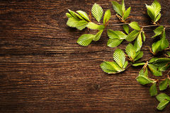 Background leaves Royalty Free Stock Image