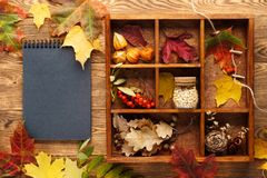 Background with leaves, nuts and berries in box and a notebook. royalty free stock photo