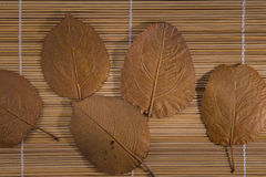 Background of leaves Stock Photography