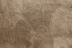 Background from leaves of pale brown color Stock Photos