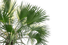 Background leaves palm leaves Stock Photos