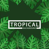 Background with leaves tropical plant stock illustration