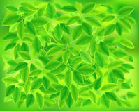 Background of the leaves. Vector illustration. Stock Images