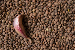 Background with lentils and garlic Royalty Free Stock Images