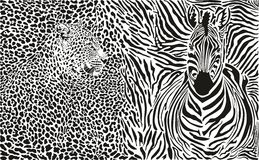 Background with leopard and zebra Stock Image