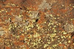 Background - Lichen covered cracked rock Royalty Free Stock Photo