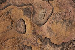 Background - Lichen covered cracked rock Royalty Free Stock Images