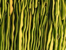 Background of light green beans sorted Stock Photography