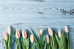 Background with light pink tulips on blue painted wooden planks. Place for text. Top view with copy space Stock Photo