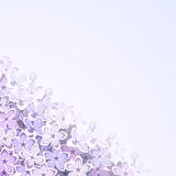 Background with lilac flowers. Vector eps-10. Stock Photography