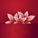 Background with lilies. Lily on a burgundy background Stock Image