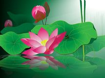 Background .Lilies Stock Image