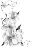 Background lilies. In shades with decorative floral pattern Stock Image
