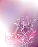 Background with lily flowers Stock Images