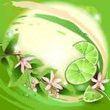Background with lime slices Royalty Free Stock Images