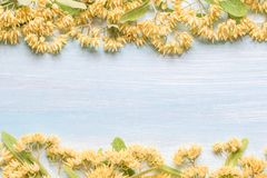 Background with linden flowers on a wooden table Stock Photos