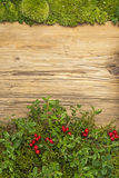 Background with lingonberries and old rustic wooden board and moss Royalty Free Stock Image