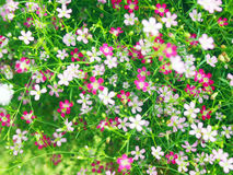Background of little flowers Royalty Free Stock Photo