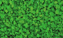 Background of small green plants royalty free stock image