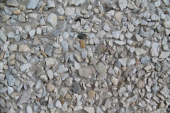 Background with little rocks. Grey gravel texture. Stock Image