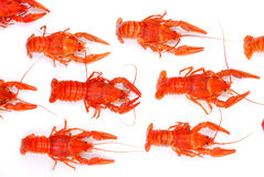 Background from lobsters Royalty Free Stock Photo